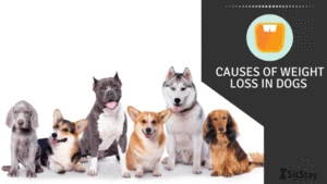 Causes of Weight Loss in Dogs