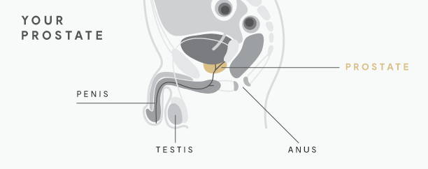 prostate milking guide