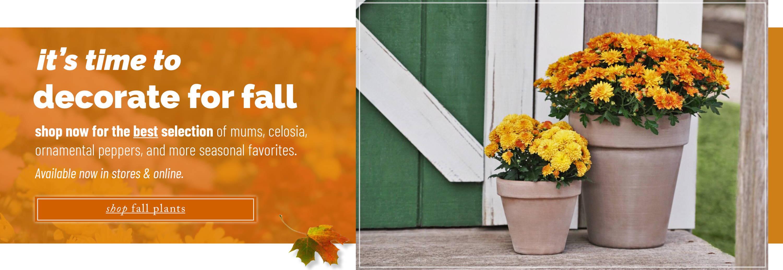 Shop Fall Flowering Plants