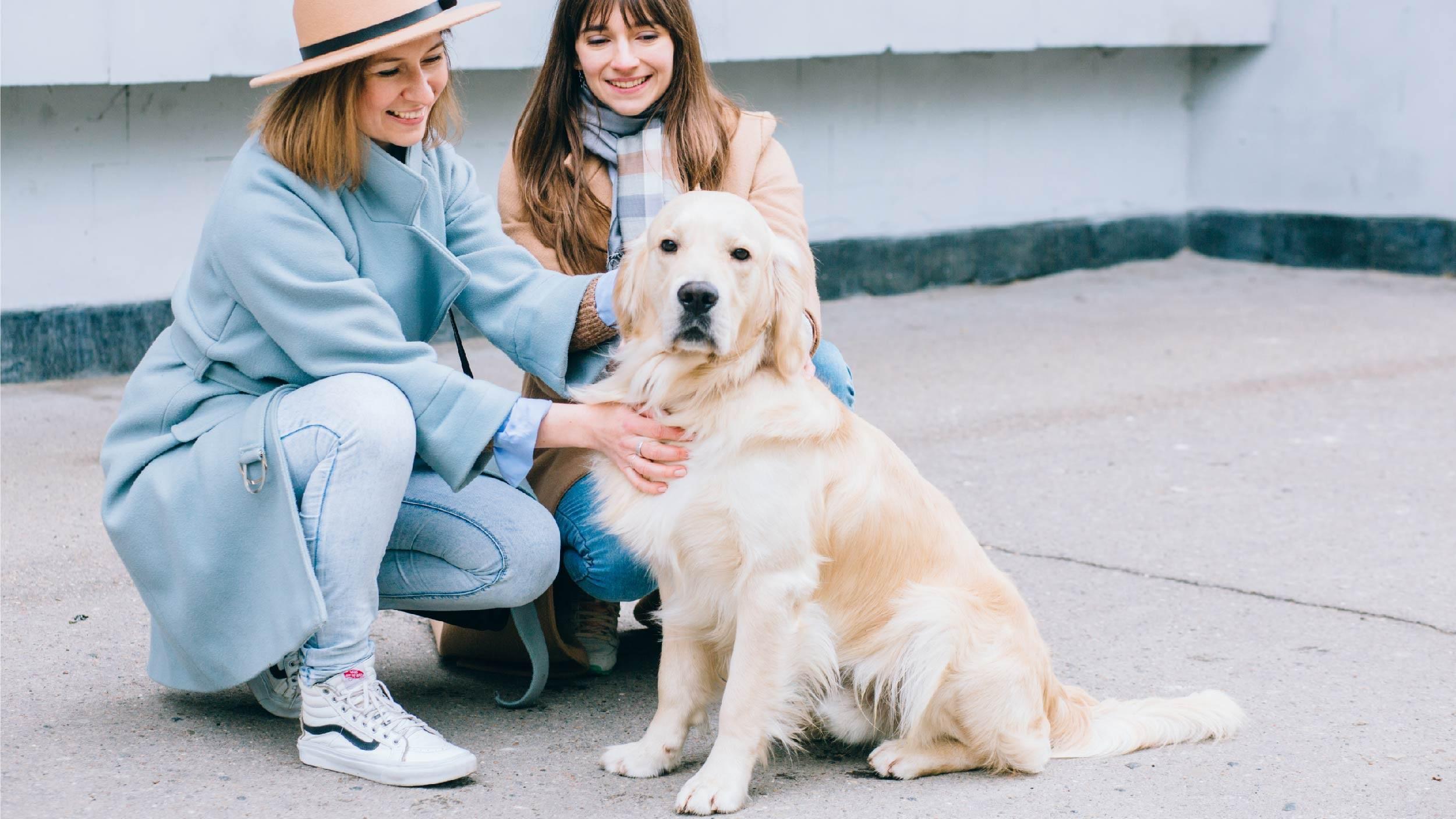 Reinforcing a dog's behavior