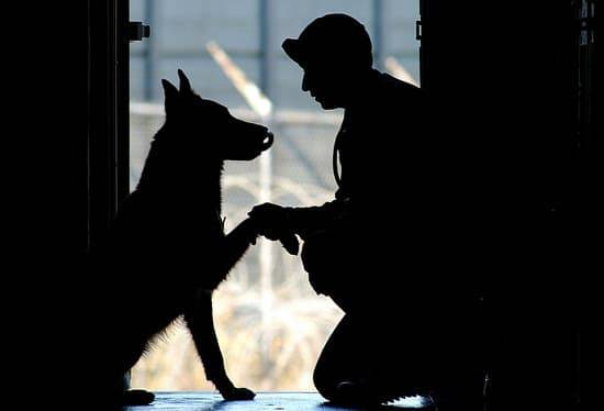 Black silouettes of a service dog and his owner that is a military man.