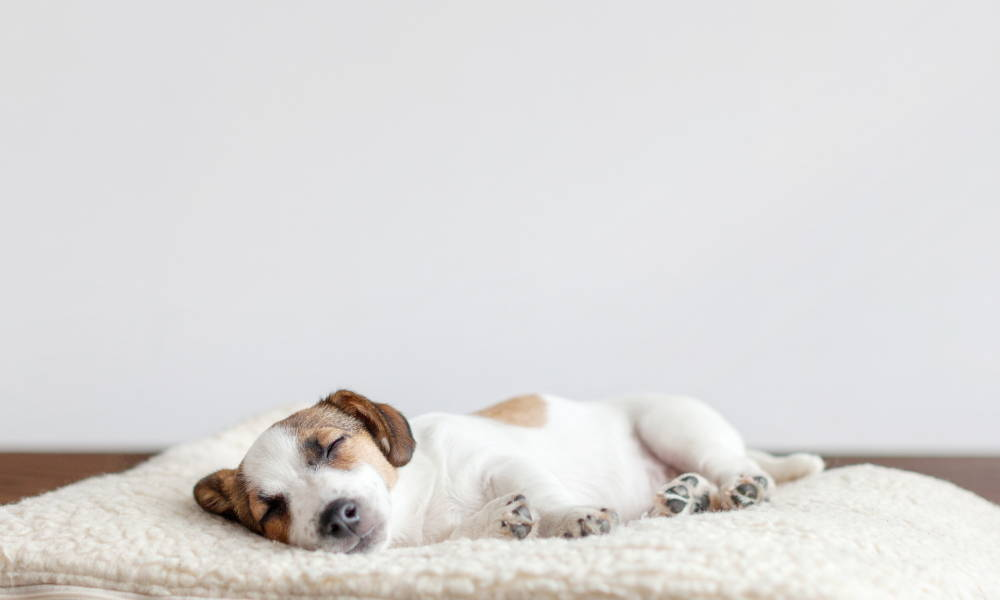 a puppy sleeps on a white dog bed