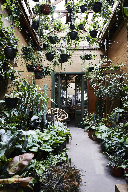 ThePlantSociety-conservatory-shop