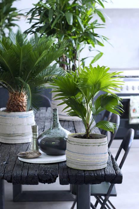 roots van de palm
