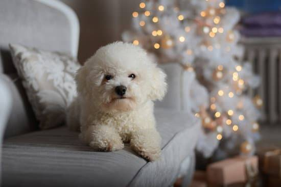 A bichon frise laying on a white couch with a white christmas tree in the background