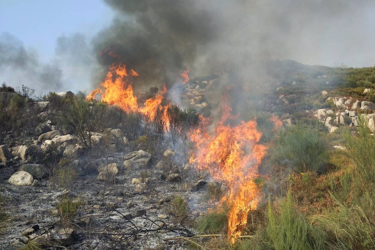 A controlled burn moves across a landscape of shrub