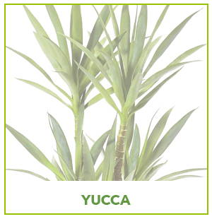 ARTIFICIAL YUCCA PLANTS