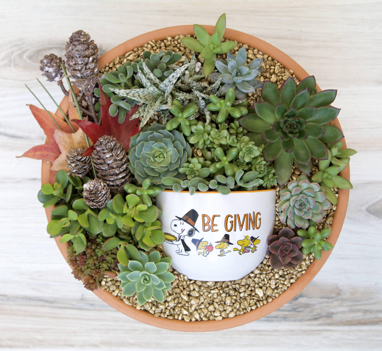 Thanksgiving Pot in a Pot Succulent DIY Guide