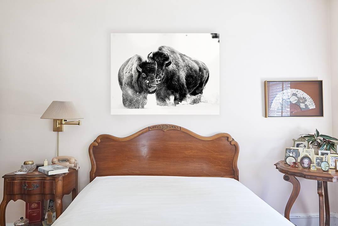 animal photography for sale in bedroom home decor