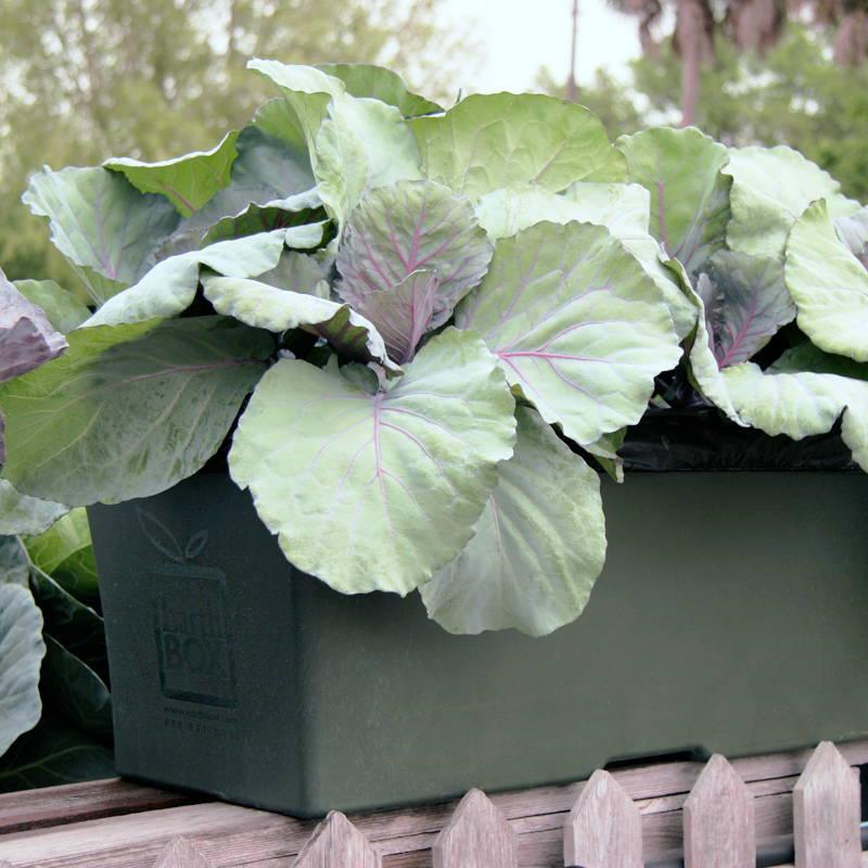Dark Green EarthBox Original Container