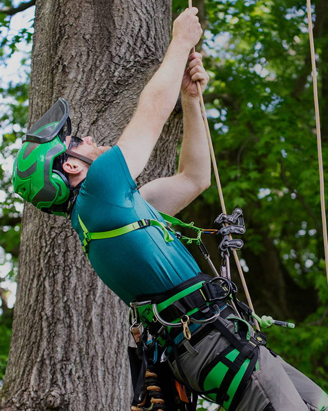 image of Real-world testing for professional arborists