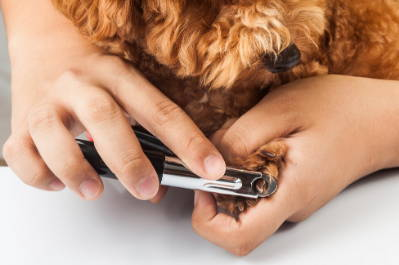 5 Tips To Help You Groom Your Dog At Home - Team K9