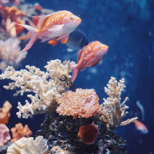 Ocean Animal Dads