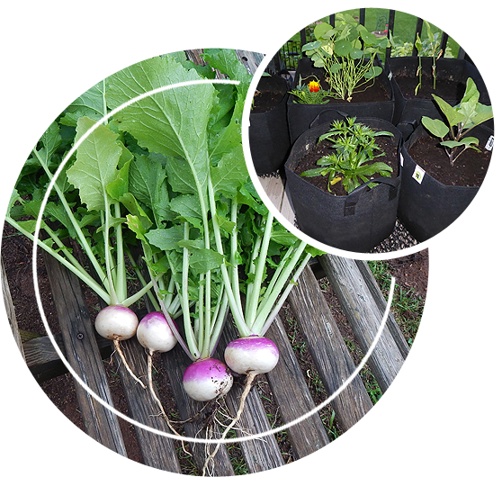 Different kinds of plants in grow bags