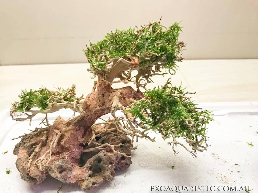 bonsai driftwood small