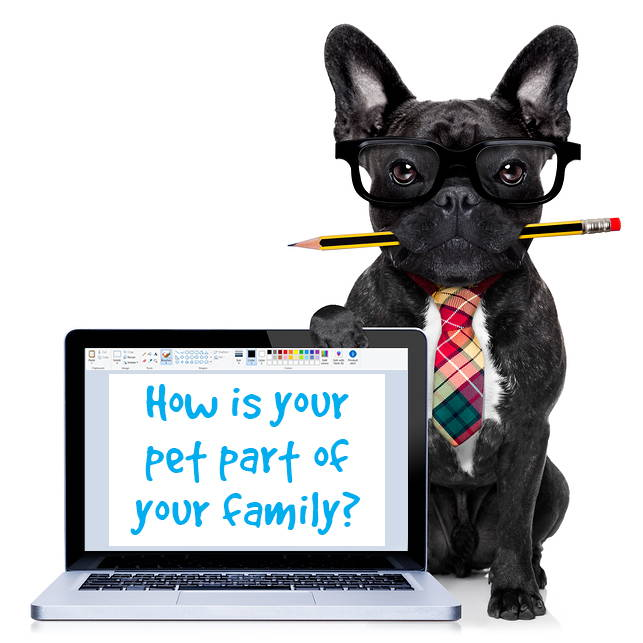 Glandex Scholarship - How is your pet part of your family?
