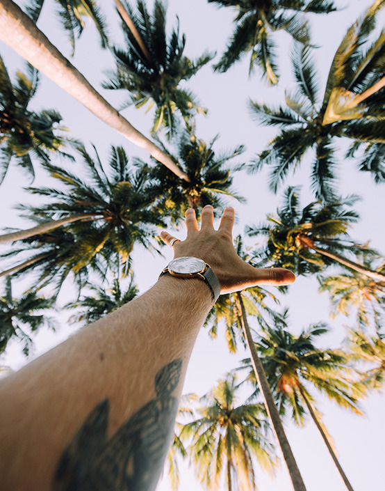 watch and arm by palm trees