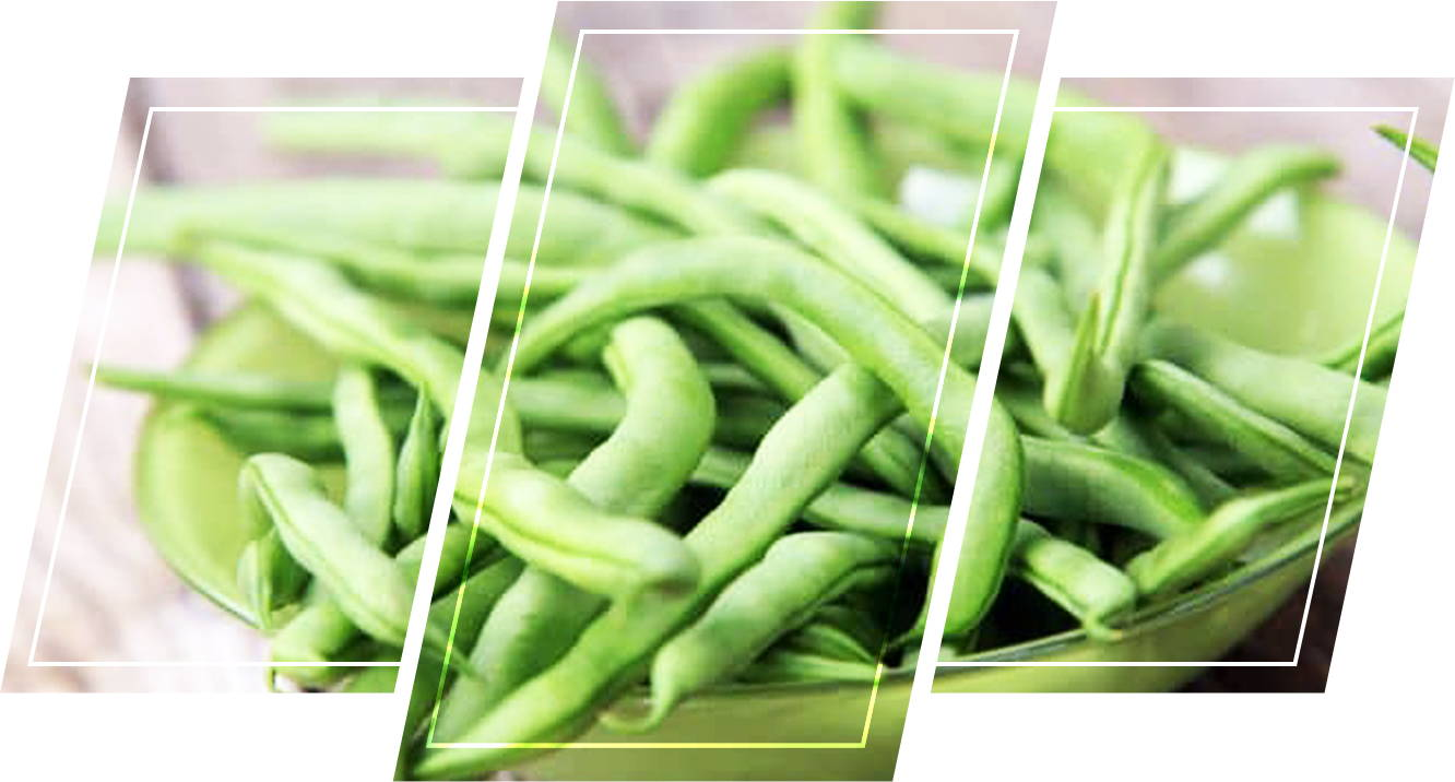 Green beans plants easy to grow