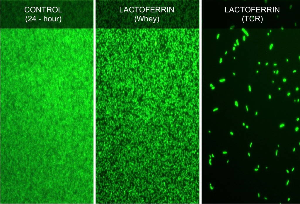 bacteria inhibited by lactoferrin TCR