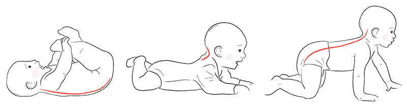 Image result for s-shaped spine baby's spines
