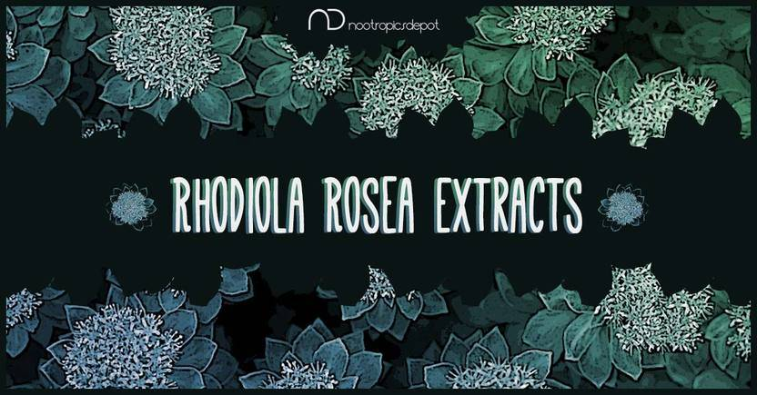 Comparing Rhodiola rosea and crenulata extracts