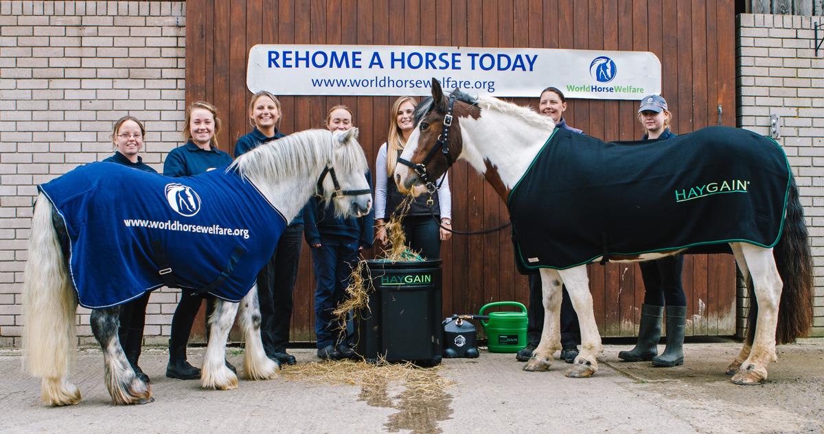 Haygain and World Horse Welfare