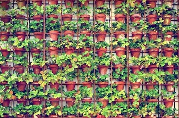 Mur couvert de pots à la verticale