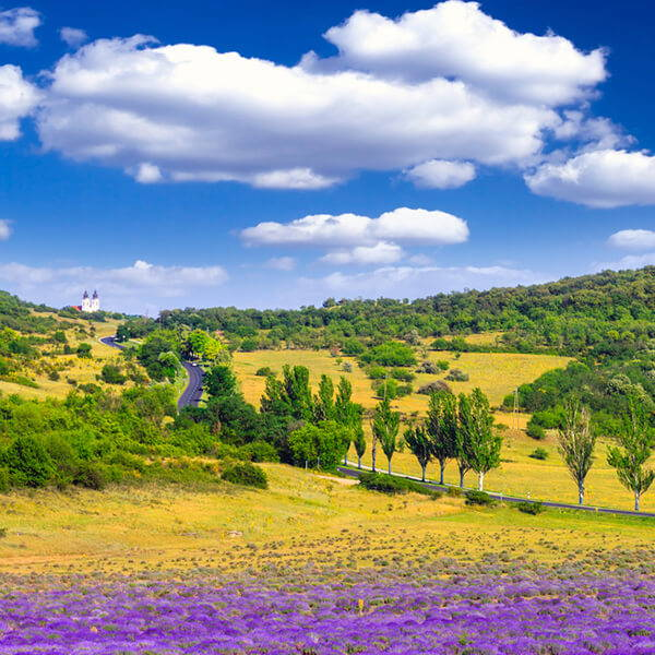 High Quality Organics Express French landscape