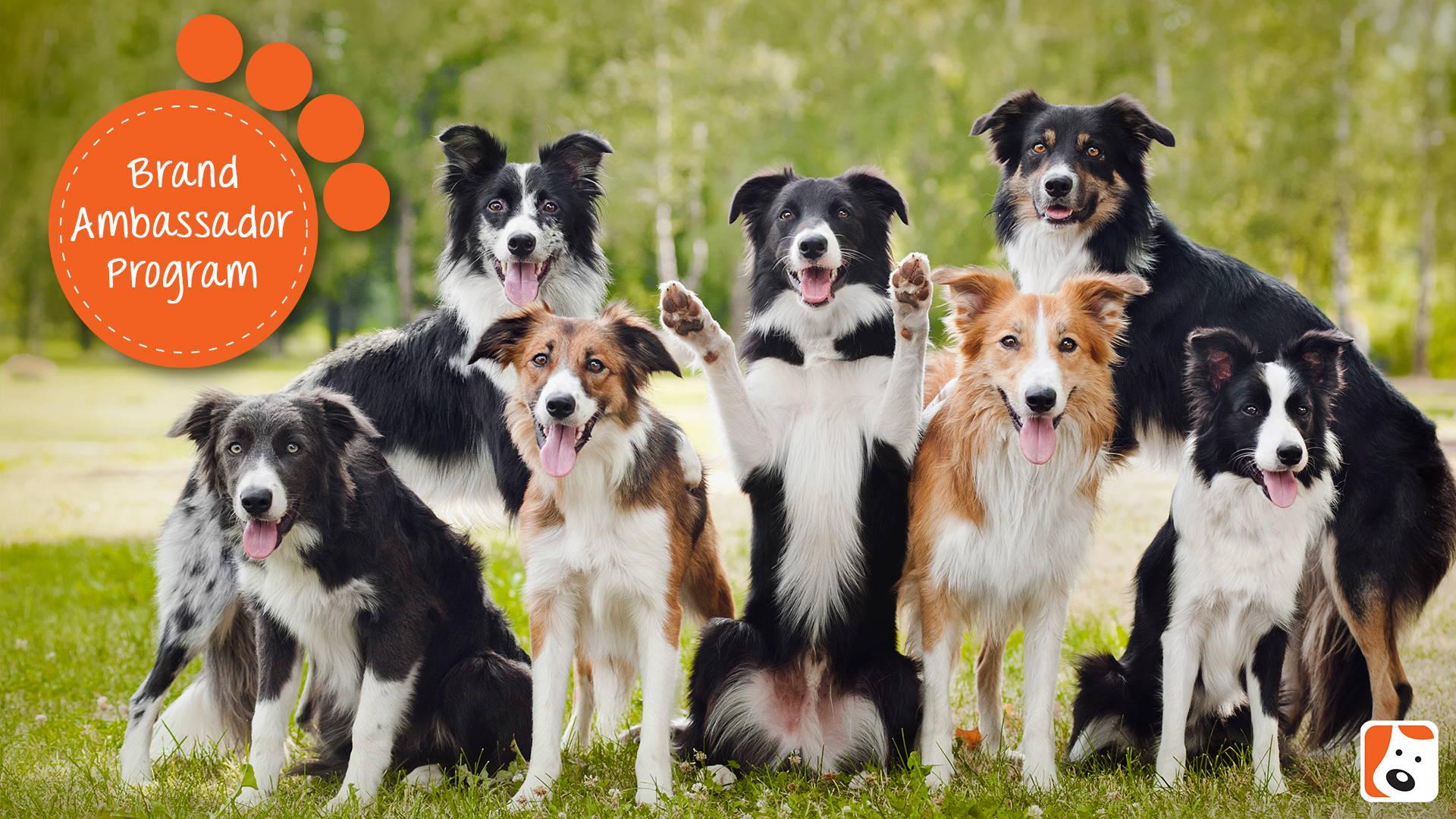 BONEO Canine Brand Ambassador Program