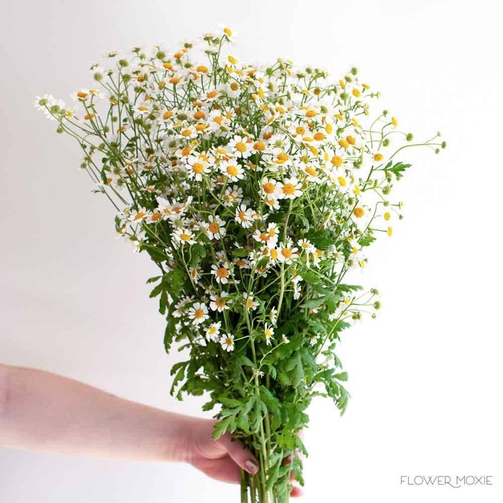 feverfew chamomile wedding flower