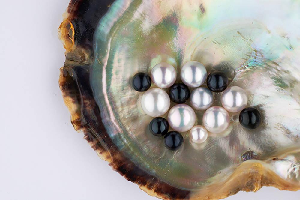 Black and White Akoya Pearls in Pinctada Shell