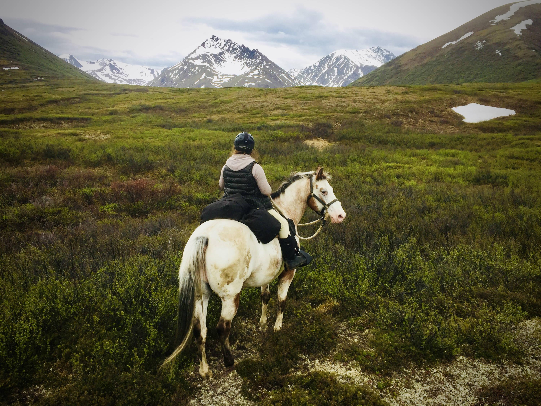Arctic Horse horse trekking trail riding denali alaska windy creek camping with horses Jen Dushane