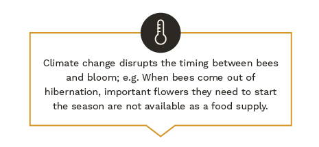 Climate change disrupts the timing between bees and bloom; e.g.: When bees come out of hibernation, important flowers they need to start the season are not available as a food supply.
