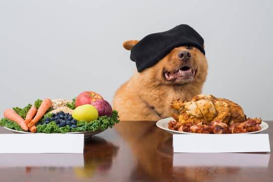 Blindfolded dog with a plate full of meat and a plate full of veggies in front of them