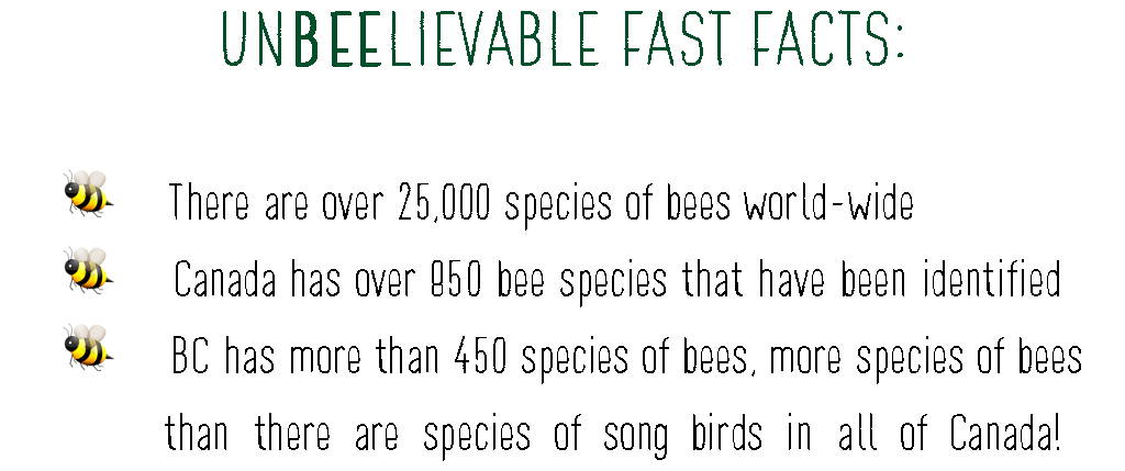 There are over 25,000 species of bees world-wide Canada has over 850 bee species that have been identified BC has more than 450 species of bees, more species of bees than there are species of song birds in all of Canada!