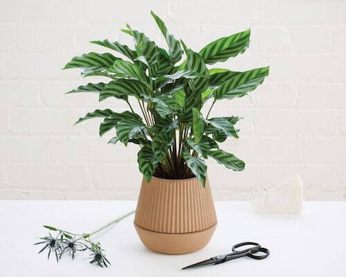 UmbraShift Pleated Planter