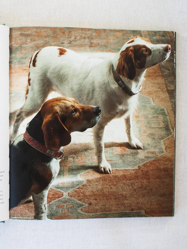 Lou the Beagle and Lucille the Brittany Spaniel look smart in their dog collars made of genuine Fortuny fabric created by B. Viz Design, pictured in Once Upon A Pillow