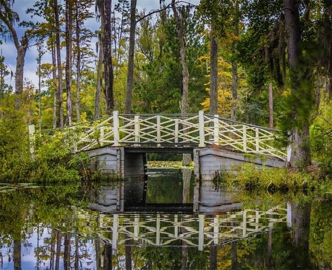 Propose at Cypress Gardens, South Carolina