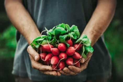 Les légumes sont des aliments ayant une faible empreinte carbone