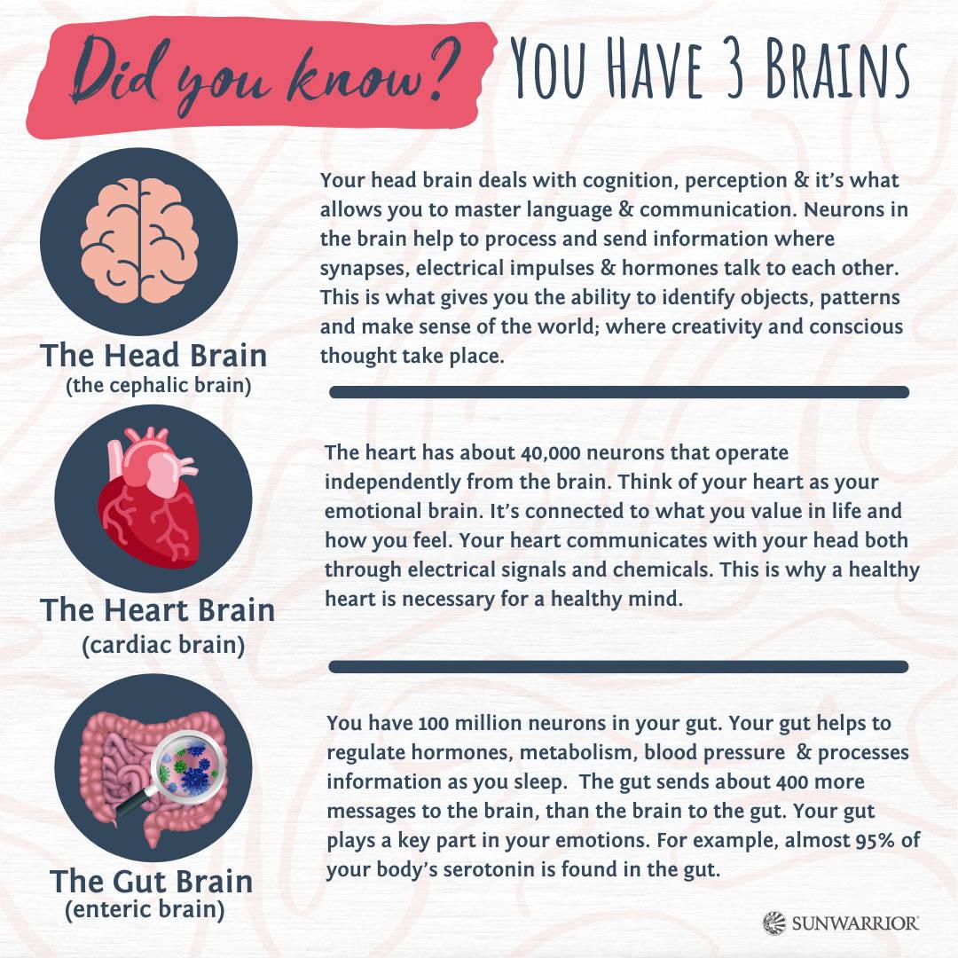 three brains in