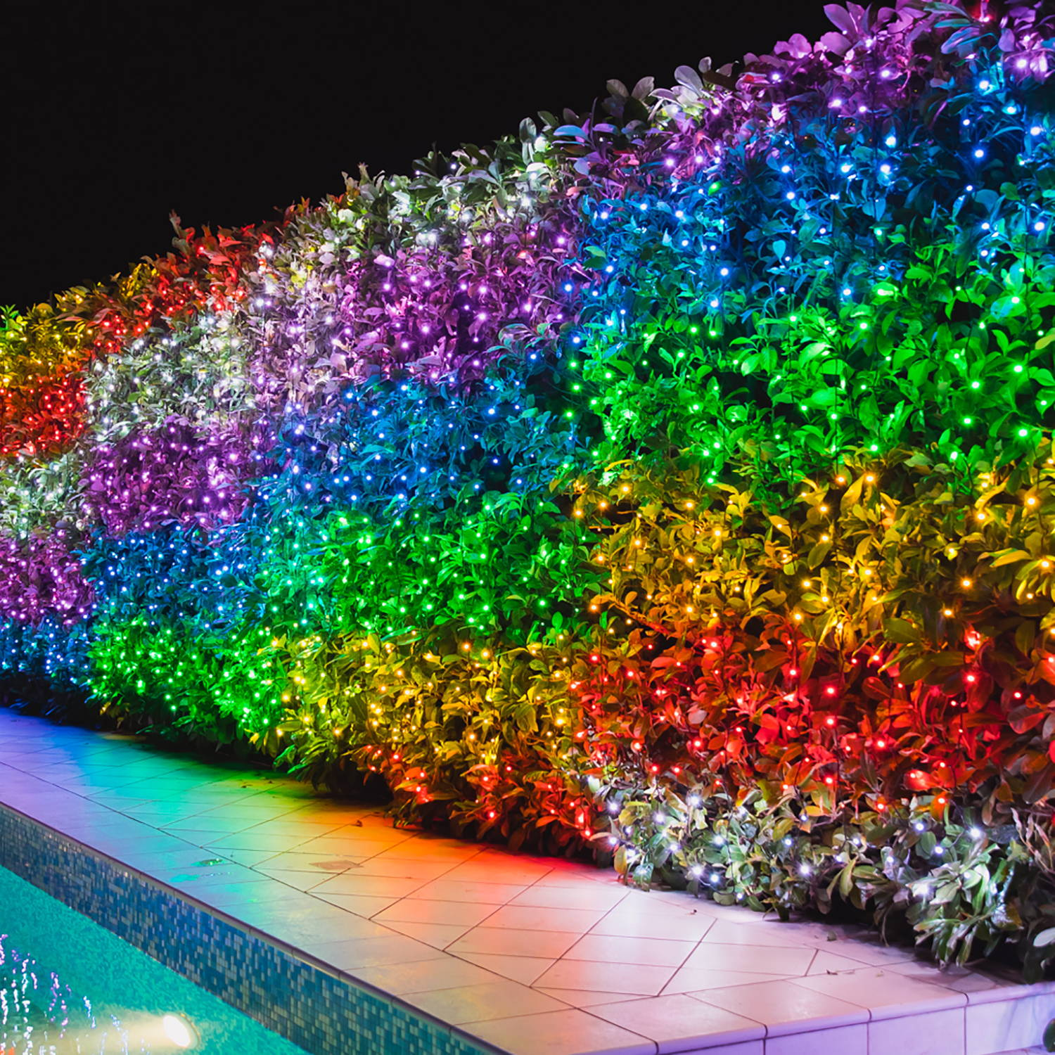 Multi coloured Twinkly lights illuminating garden hedge