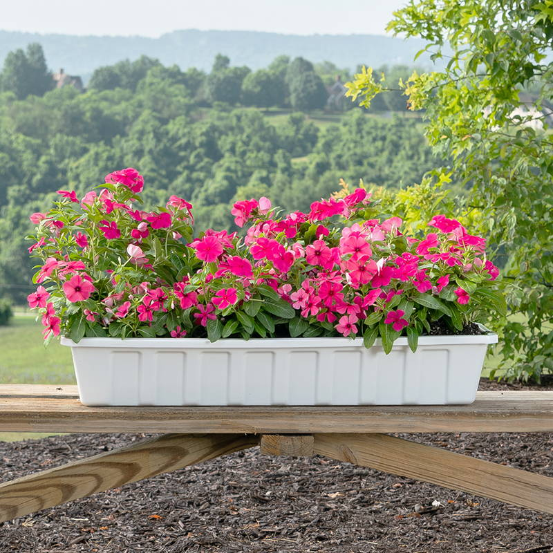 Pink flowers growing in a white poly-pro flower box