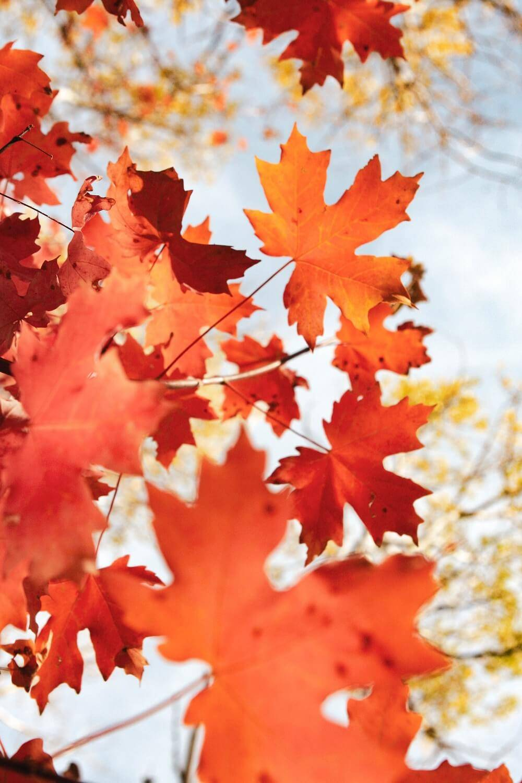 Peau sensible à l'automne