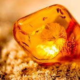 Amber Extract