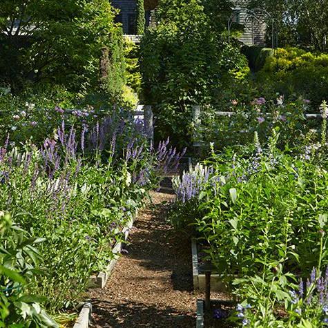 flower garden picture 2