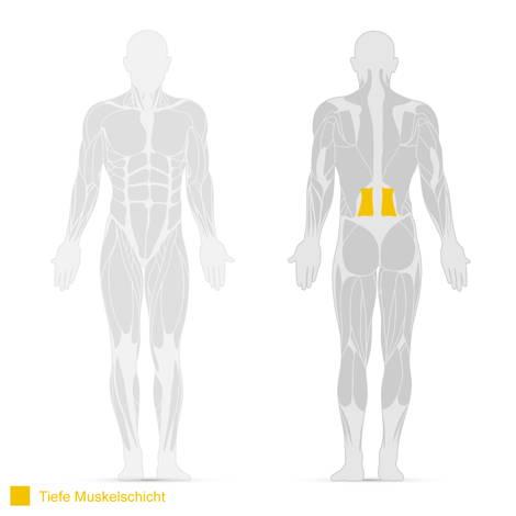 Darstellung des Bauchmuskels M. quadratus lumborum