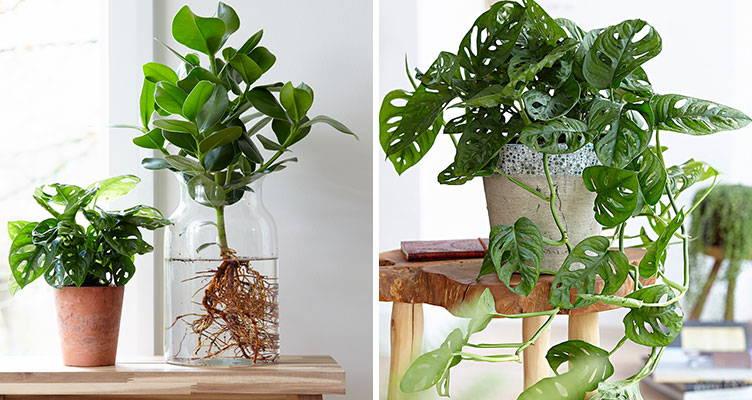 Les 10 plus belles plantes purificatrices d'air