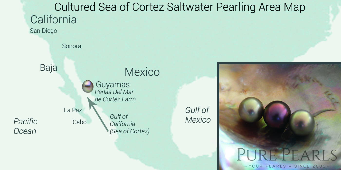 The Cortez pearls are farmed at a single location in the Gulf of Mexico
