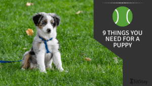 9 Things You Need For A Puppy