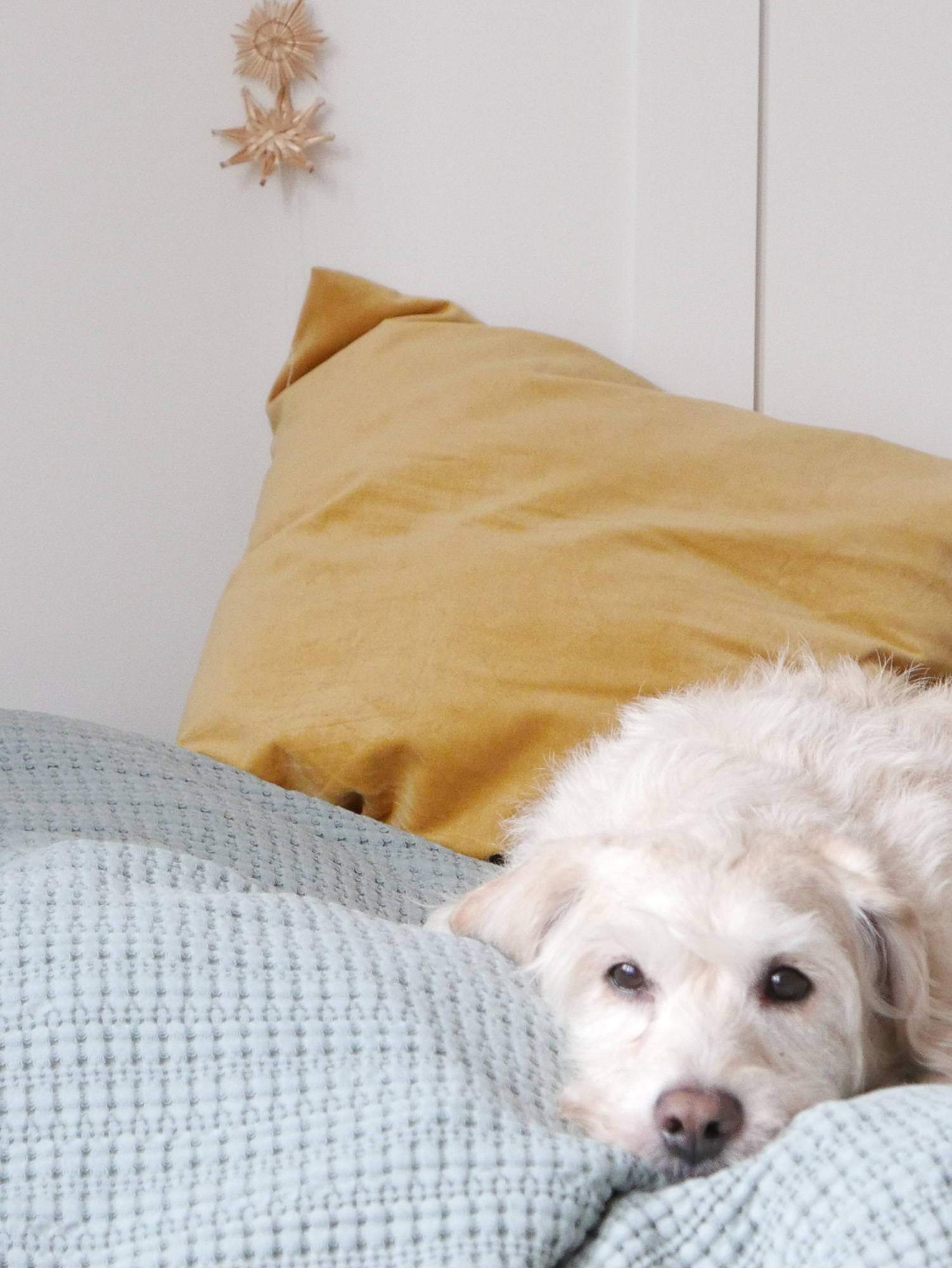 Guest bed with ming green throw, mustard cushion and cute dog